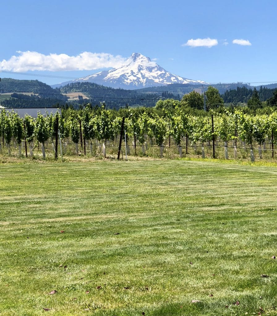 The Vineyards and Mt Hood